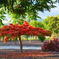 Flame tree. :: Valentina Severinova