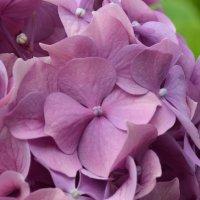 цветок :: Stas Beloglazov