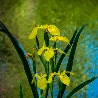 Цветы :: Дмитрий Грабинский