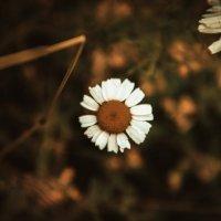 Цветок :: Anastasia Silver