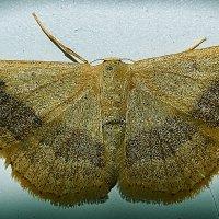 ночная бабочка :: Андрей Выровой