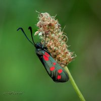 Бабочка... :: Фарит