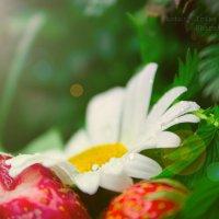 tasty summer :: Ирина Шарафутдинова