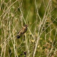 Птица :: Андрей Головин