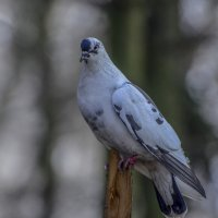 Птичка :: Владимир Николаевич