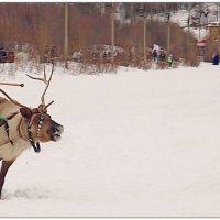 На вираже зимы... :: Кай-8 (Ярослав) Забелин