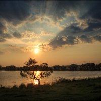 Солнце над горизонтом :: Елена Ерошевич