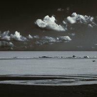 бег собаки по азовскому морю :: Николай Семёнов