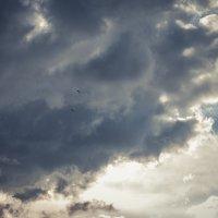 Before the storm :: Ольга Круковская
