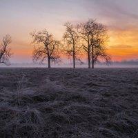 Краски солнца :: Сергей Корнев