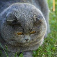 Кошки-мышки :: Руслан Гончар