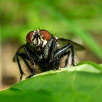 Портрет мухи) :: Alex Bush