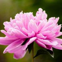 flower_1 :: Trage