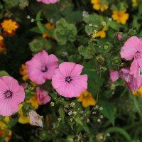 Цветочный хоровод-222. :: Руслан Грицунь
