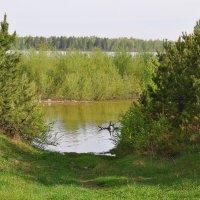 Хорошо летом на природе :: Алексей http://fotokto.ru/id148151Морозов