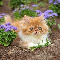Девочка цветочек :: Лана Банькина