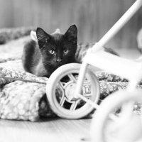 Котик :: Мария Вылегжанина