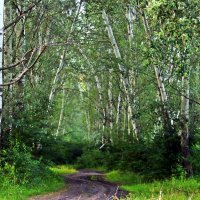 Лес, умытый теплым июньским дождем. :: Валентина ツ ღ✿ღ