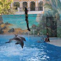 в полете с дельфинами :: Валентина Боровкова