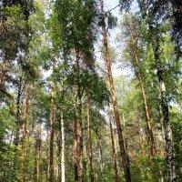 В лесу! :: Oleg Beer