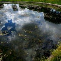 Утонуло небо в пруду :: сергей адольфович