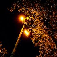 Ночная прогулка :: Marina Marina