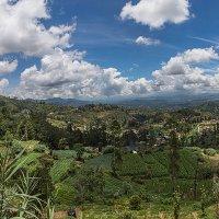 Панорама долины в Шри Ланке :: Иван Пшеничный