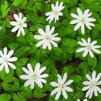 Белое на зелёном :: Seva-stopol (Севастьян)