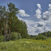 Как облака над лесом низко... :: Михаил (Skipper A.M.)