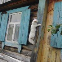 Кошка - домолазка :: Владимир Ростовский