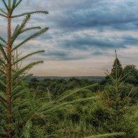 Вечер в лесу :: Иван Анисимов