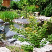 Японский садик. :: Марина Харченкова
