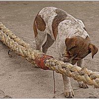 Морской пёс :: Кай-8 (Ярослав) Забелин