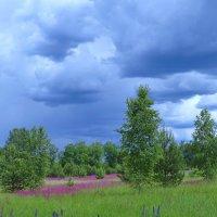 к дождю :: Сергей Цветков
