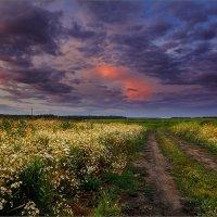 Лето... вечер, деревенская дорога... :: Александр Никитинский