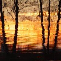 золото разлитое в воде :: Александр Прокудин