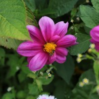 Цветочный хоровод-234. :: Руслан Грицунь