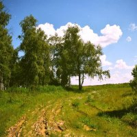 по дороге в лес :: Ирина Кочкарева
