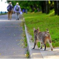 Кошка, гуляющая сама по себе. :: Николай Емелин