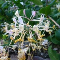 Цветы 2015 :: Наиля