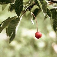 А ягодка созрела ... :: Андрей Куприянов