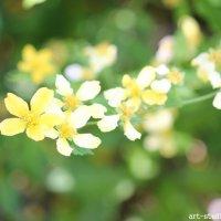 Цветочный хоровод-239. :: Руслан Грицунь