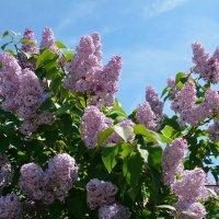Весны цветенье... (этюд 3) :: Константин Жирнов