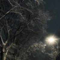 Зимняя ночь :: shvlad