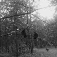 Почему люди не летают как птицы? :: Кристина Виноградова