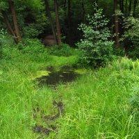 В заколдованных болотах там кикиморы живут :: Андрей Лукьянов