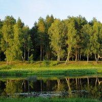 на реке Руза :: Андрей Куприянов