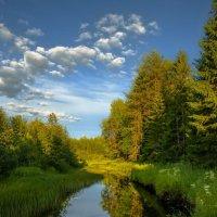 Берега Пигомы - реки... :: Федор Кованский