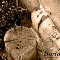 Жизнь старых вещей :: Дарья Бухарова