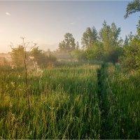 Рассвет на опушке леса. :: Николай Алехин